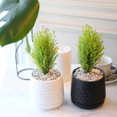 모노 화분 율마 공기정화식물