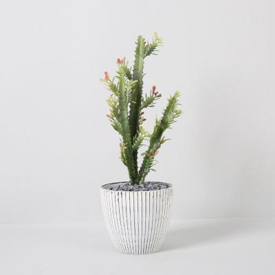 다육식물 다육이 미니화분 pvc선인장 26cm(S)