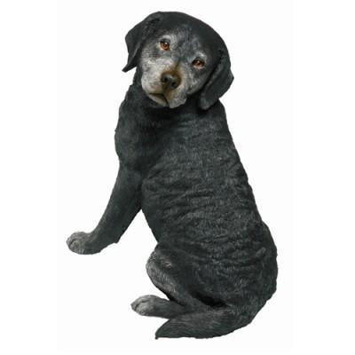 Labrador Retriever(래브라도 리트리버)_OS472