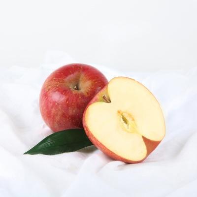 [초록자연] 사과 5kg(16-17과)