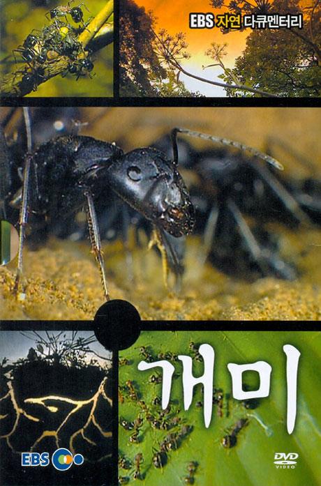 개미 [EBS 자연 다큐멘터리]