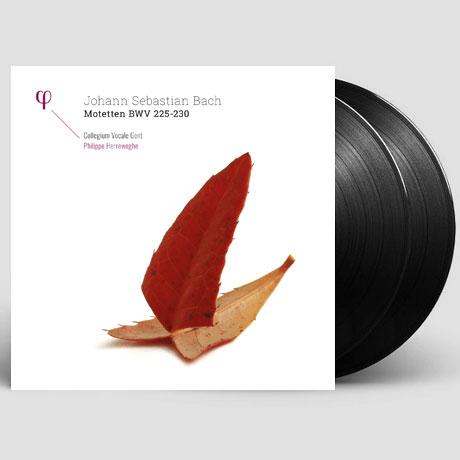 MOTETTEN BWV 225-230/ PHILIPPE HERREWEGHE [바흐: 모테트 - 콜레기움 보칼레 겐트 & 헤레베헤] [LP]