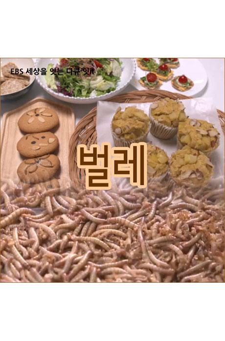 EBS 벌레 [주문제작상품]