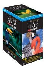 BBC 새들의 세계 10종 박스 세트