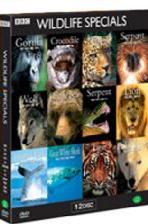 와일드라이프 스페셜 박스+영상화보집 [Wildlife Specials Box Set/ 12disc]