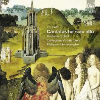 CANTATAS FOR SOLO ALTO/ ANDREAS SCHOLL, PHILIPPE HERREWEGHE [바흐: 알토 독창을 위한 칸타타]