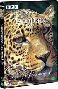 BBC 와일드라이프 스페셜: 표범 [WILDLIFE SPECIALS: LEOPARD] [15년 2월 다우리엔터테인먼트 프로모션]